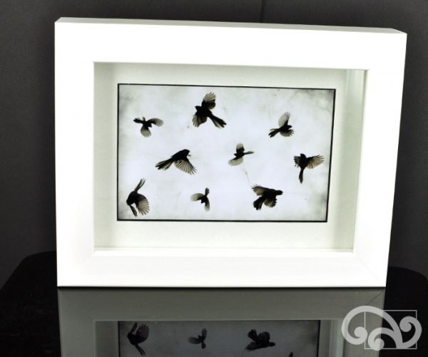 Framed photo of fantails
