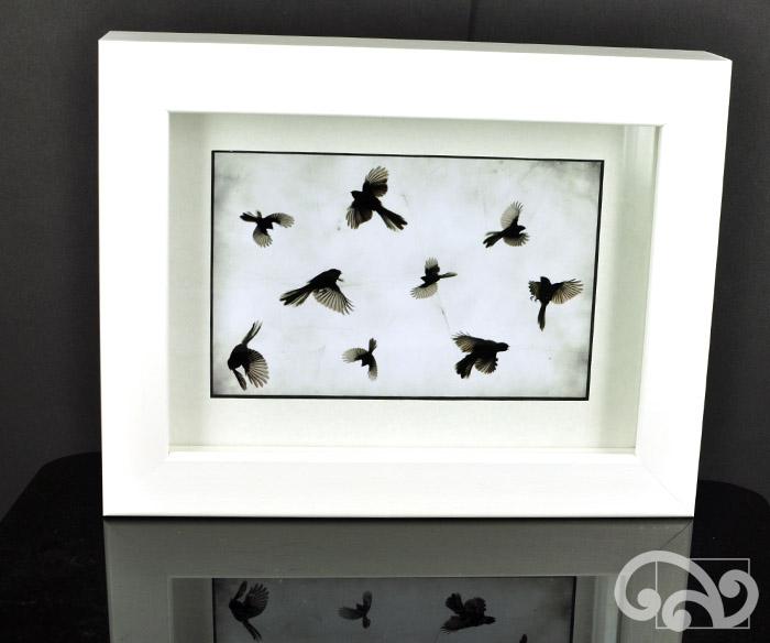 Framed photo of fantails