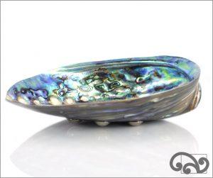Paua shell dish